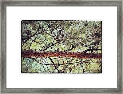 Framed Print featuring the photograph Evergreen Bird by Tara Potts