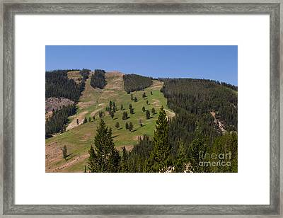 Framed Print featuring the photograph Evergreen Hillside by Charles Kozierok