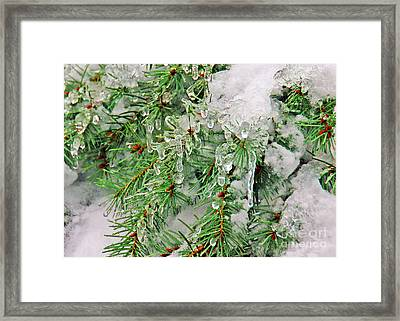 Evergreen Icicles I Framed Print