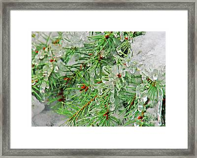 Evergreen Icicles II Framed Print