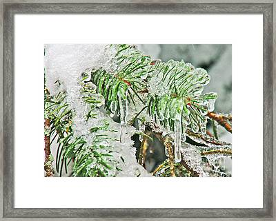 Evergreen Icicles IIi Framed Print