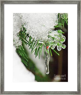 Evergreen Icicles Iv Framed Print