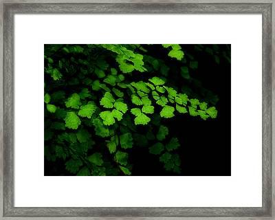 Evergreen Framed Print by Lorenzo Cassina