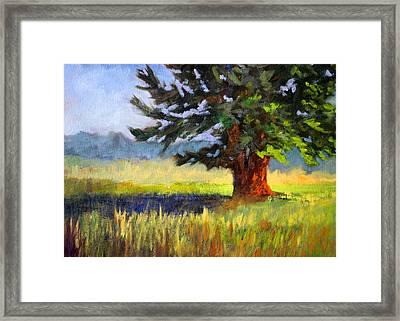 Evergreen Framed Print by Nancy Merkle