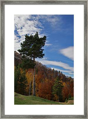 Evergreen Soldier Framed Print
