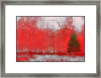 Evergreen Framed Print by Steve Godleski