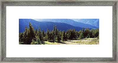 Evergreen Trees With Mountains Framed Print