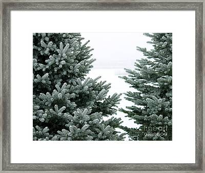 Evergreens Framed Print