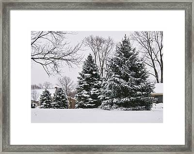 Evergreens In The Snow Framed Print