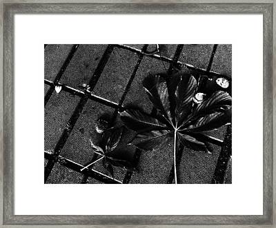 Every Beginning Has An Ending... Framed Print by Lucy D