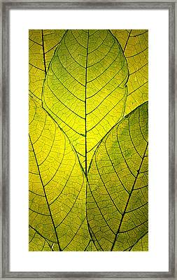Every Leaf A Flower Framed Print