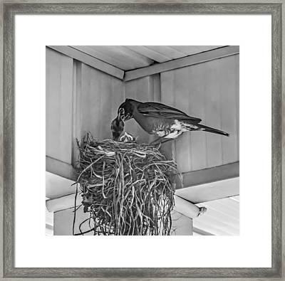 Every Spring Framed Print by Steve Harrington