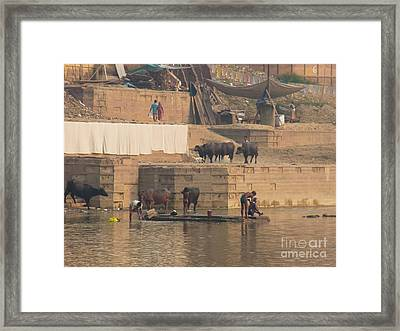 Everyday Life At Kashi Framed Print by Agnieszka Ledwon