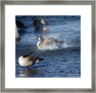 Everyone Duck Framed Print