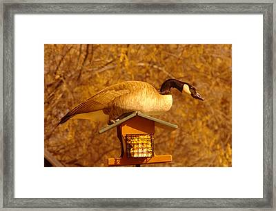 Everything Was Fine At The Bird Cafe Til Gordon The Goose Made A Pig Out Of Himself Framed Print by Jeff Swan