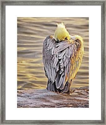 Evil Eye Pelican Framed Print