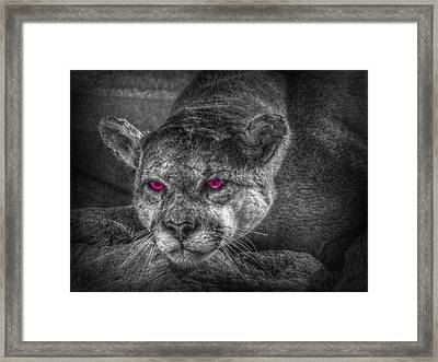 Evil Eyes Framed Print