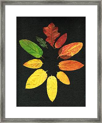 Evolution Of Autumn Bk Framed Print by Pete Trenholm