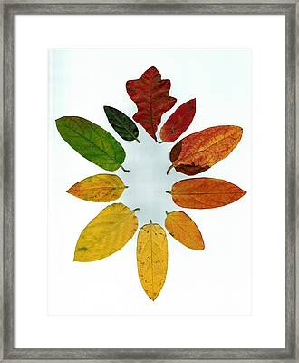 Framed Print featuring the digital art Evolution Of Autumn Wh by Pete Trenholm