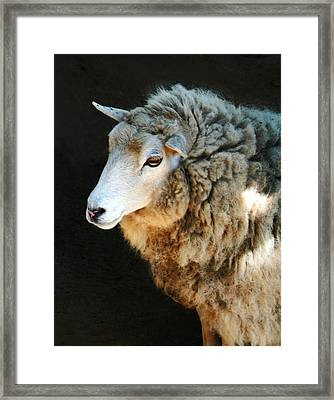 Ewe Are So Beautiful Framed Print by Ellen Henneke