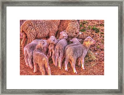 Framed Print featuring the photograph Ewephoria  by Dennis Baswell