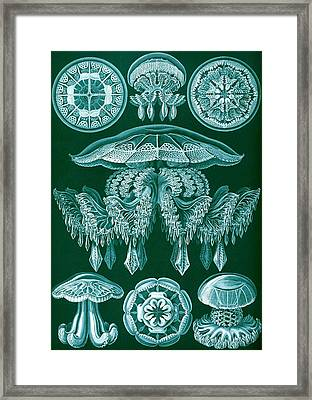 Examples Of Discomedusae Framed Print by Ernst Haeckel