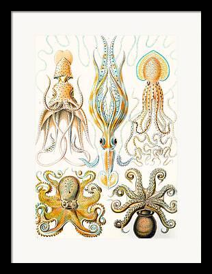 Biology Drawings Framed Prints