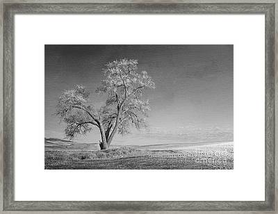 Except For Monday Framed Print by Beve Brown-Clark Photography