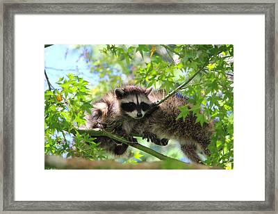 Excuse Me Coming Thru Framed Print by Kym Backland