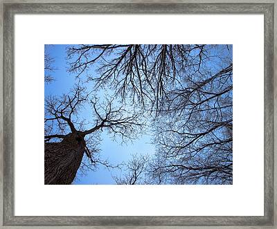 Excuse Me Have You Seen My Monkey Framed Print by Tom Druin