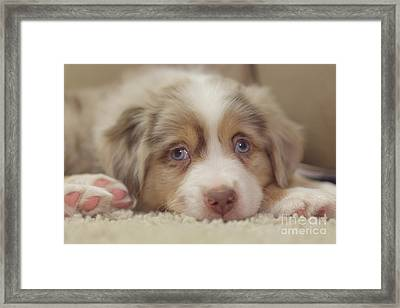 Exhausting Being A Puppy Framed Print by Kay Pickens