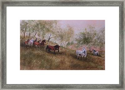 Exiled From The Herd Framed Print by Ursula Brozovich