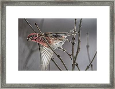 Exit Stage Left Framed Print by Susan Capuano