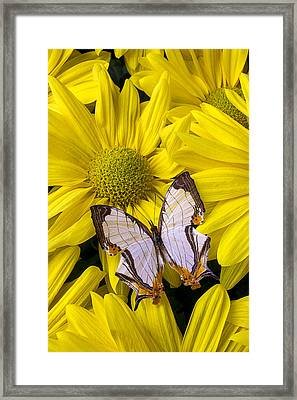 Exotic Butterfly Framed Print by Garry Gay