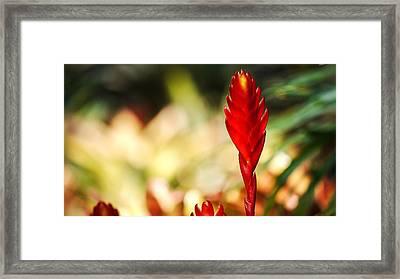Exotic Plant Framed Print by Cristin Sirbu
