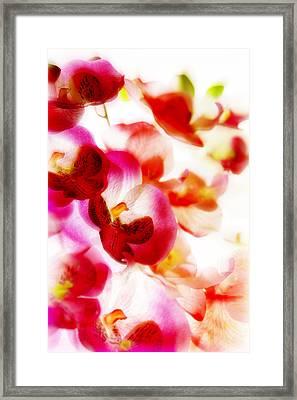 Exotic Dream Framed Print