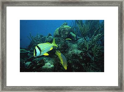 Exotic Fish Framed Print by Retro Images Archive