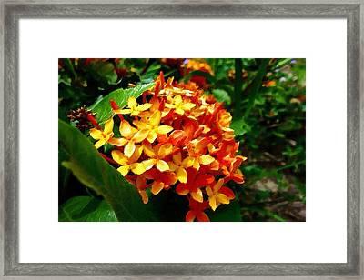 Exotic Flowers Framed Print by Florian Rodarte