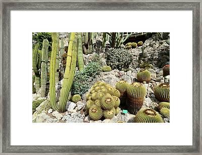 Exotic Garden Framed Print by Chris Hellier