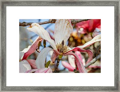 Exotic Leaves Framed Print by Robert Hebert
