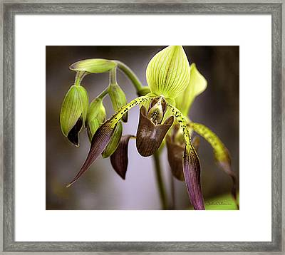 Exotic Orchid Beauty Framed Print
