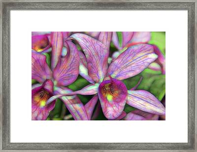 Exotic Orchid Framed Print by Daniel Hagerman