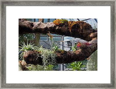 Exotic Plants Framed Print by Rod Jones