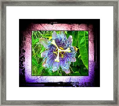 Exotic Strange Flower Framed Print by Absinthe Art By Michelle LeAnn Scott