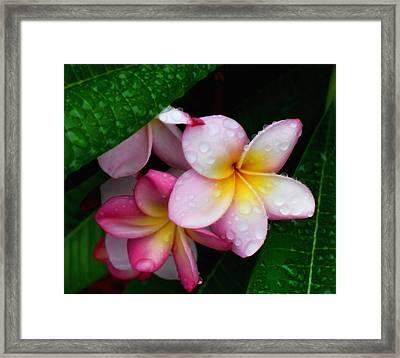 Exotic Tears  Framed Print