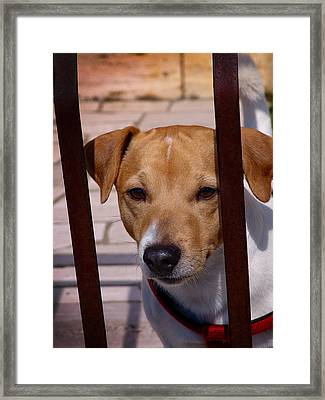 Expectant Framed Print by Alessandro Della Pietra