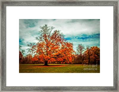 Expecting The Winter Framed Print by Hannes Cmarits