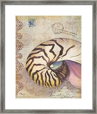 Expedition Shell I Framed Print