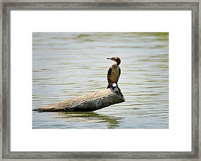 Experience Nature In Estero San Jose Framed Print