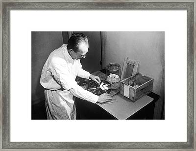 Experiments On Mice Framed Print by National Cancer Institute
